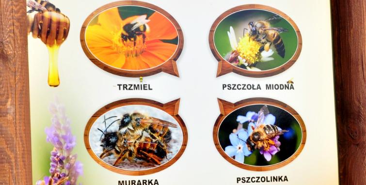 Ścieżką z pszczołami